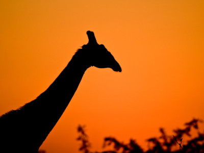 go on a south african safari real family trips