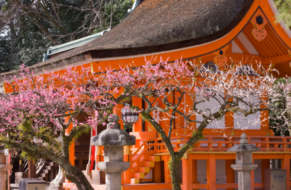 beautiful kyoto japan fun things to do with kids