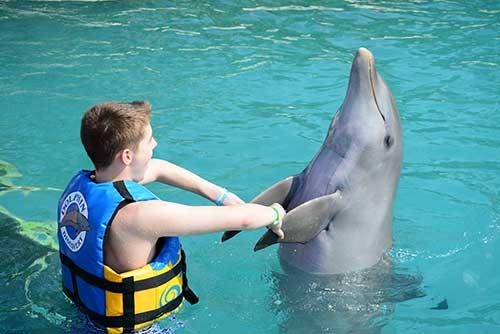 Dolphin-8